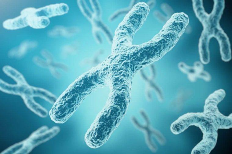 Jenis Kromosom