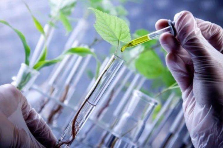 Manfaat Bioteknologi Bidang Pertanian