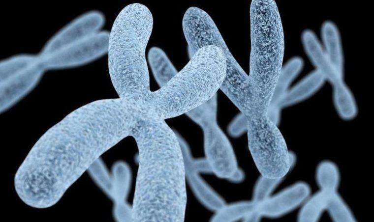 Pengertian Kromosom