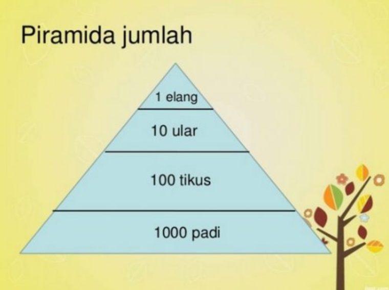 Piramida Jumlah