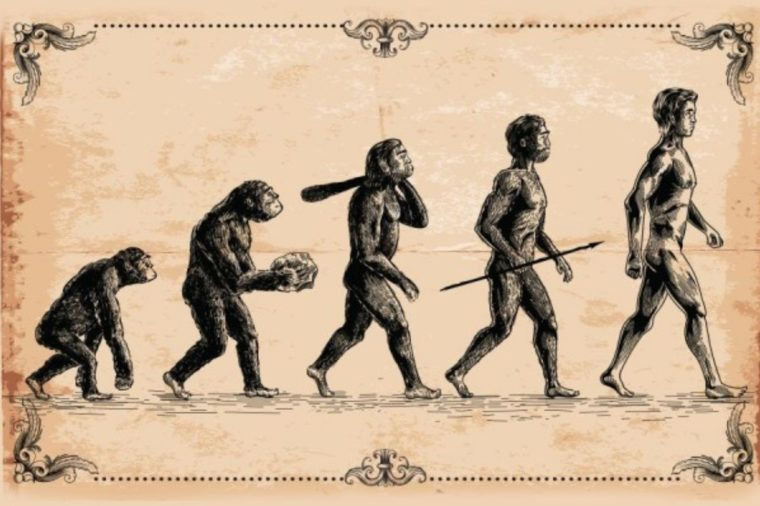 Prinsip Evolusi