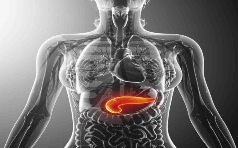 Sel Penyusun Sistem Endokrin