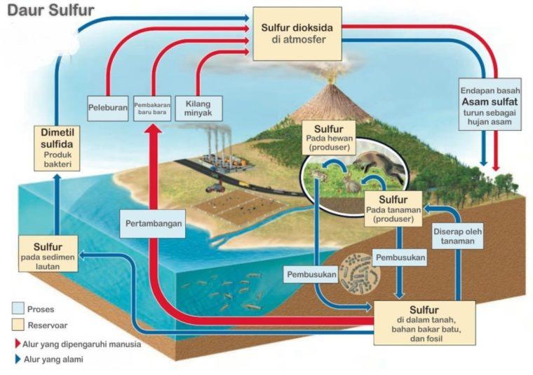 Siklus Pembentukan Daur Biogeokimia