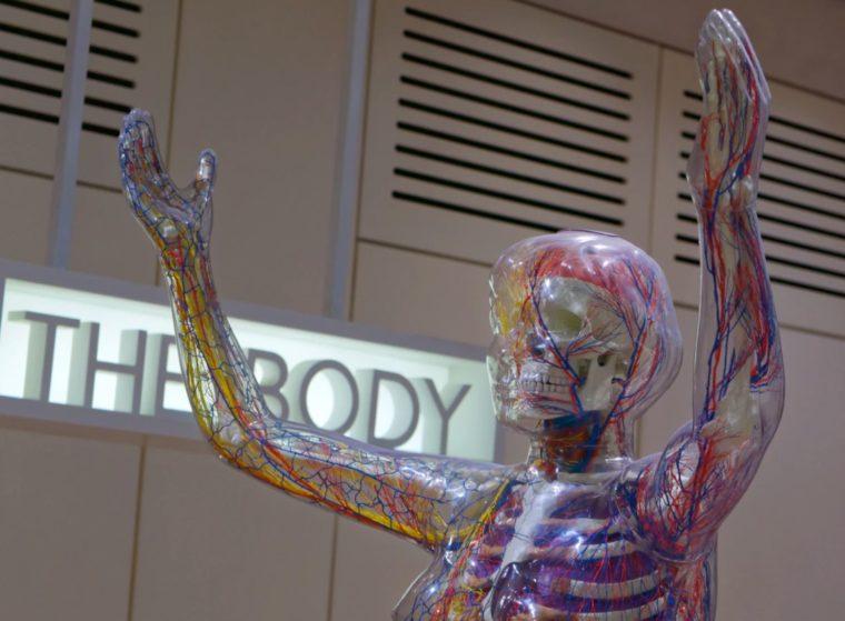 Struktur Sistem Saraf Manusia