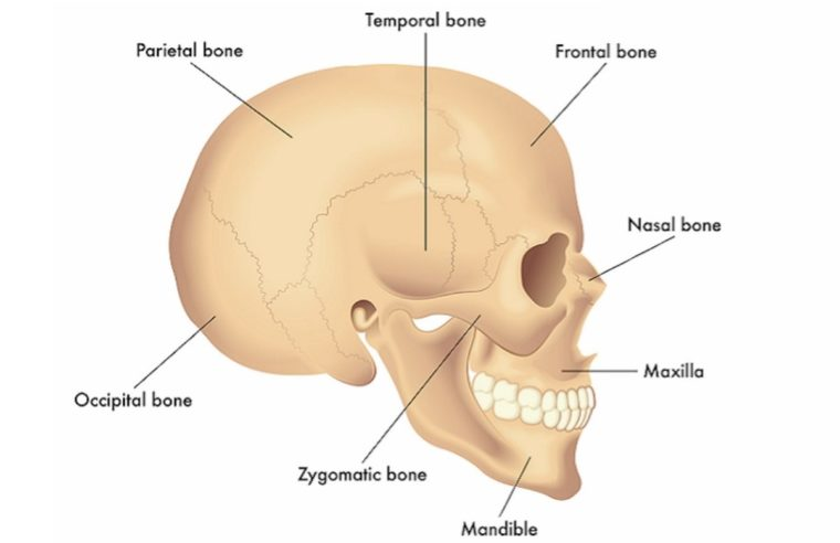 Tulang Tengkorak