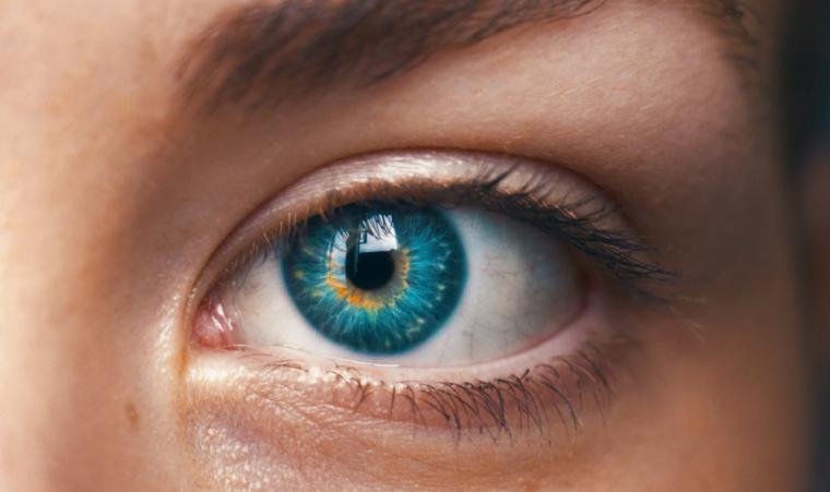Apa Itu Sistem Indera Mata