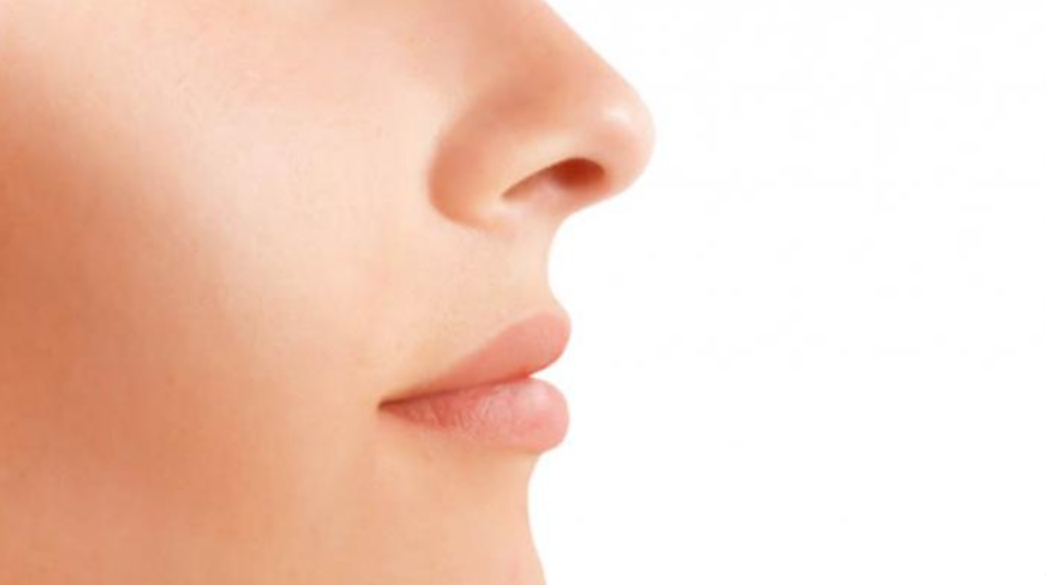 Gambar Thumbnail Sistem Indera Hidung