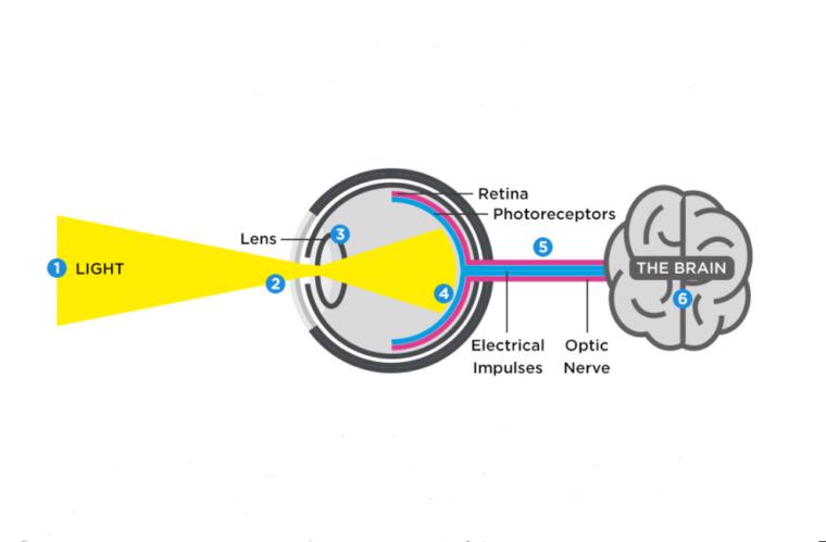 Proses Jalannya Rangsangan Indera Mata